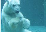 Polar Bears are Left Handed